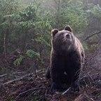 Медведь28